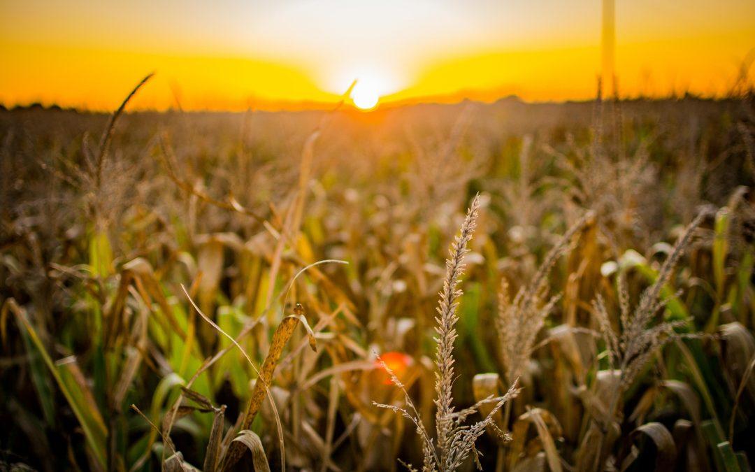 Productores agropecuarios de Venezuela: Abastecemos solo el 20% del consumo nacional