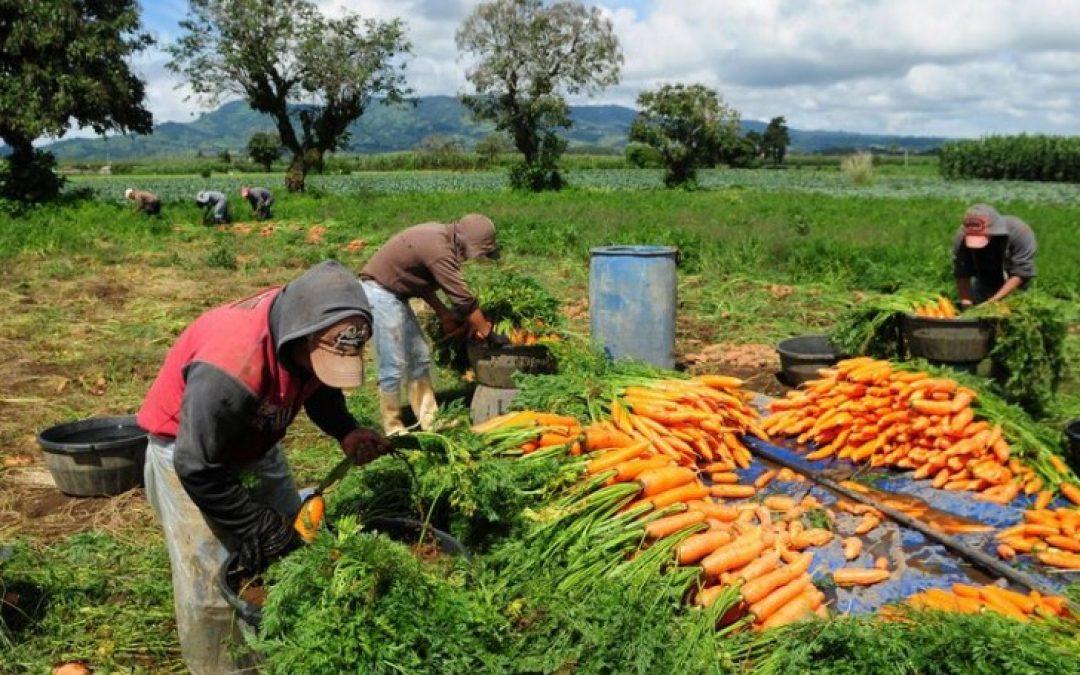 Precios mundiales de los alimentos aumentan en octubre: FAO