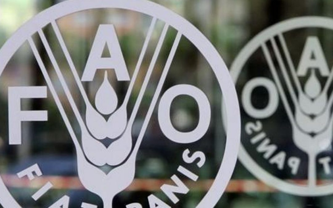 FAO: Índice precios mundiales de alimentos sube en abril a máximos desde mediados 2014