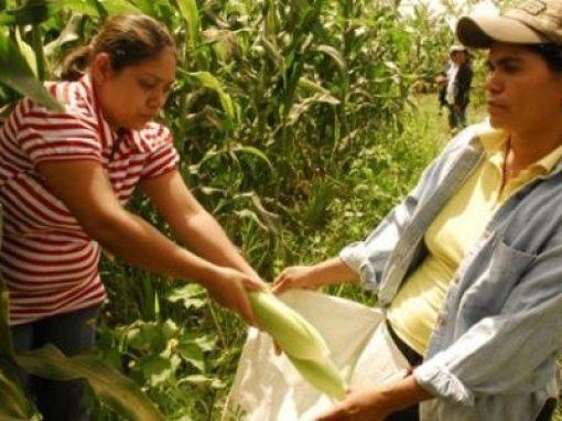 Venezuela: Las mujeres trabajan la tierra para producir los alimentos que no pueden comprar